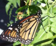 Monarch093007B